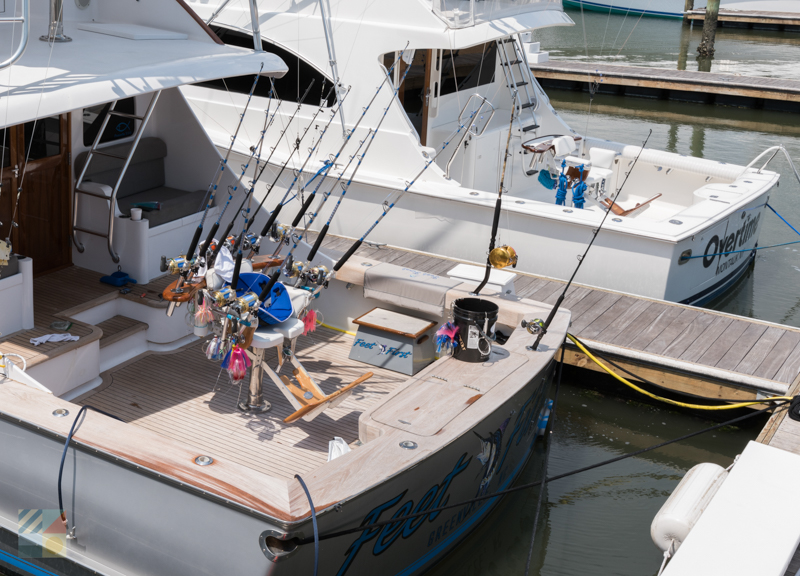 Many headboats are available in Morehead City