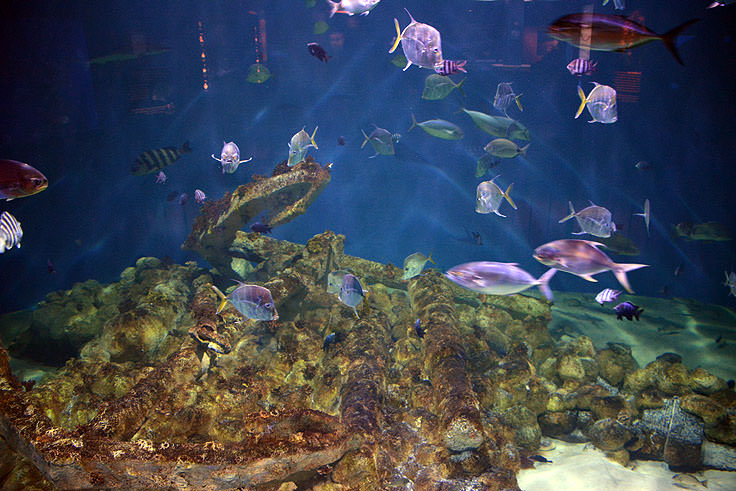A tank view at N.C. Aquarium at Pine Knoll Shores
