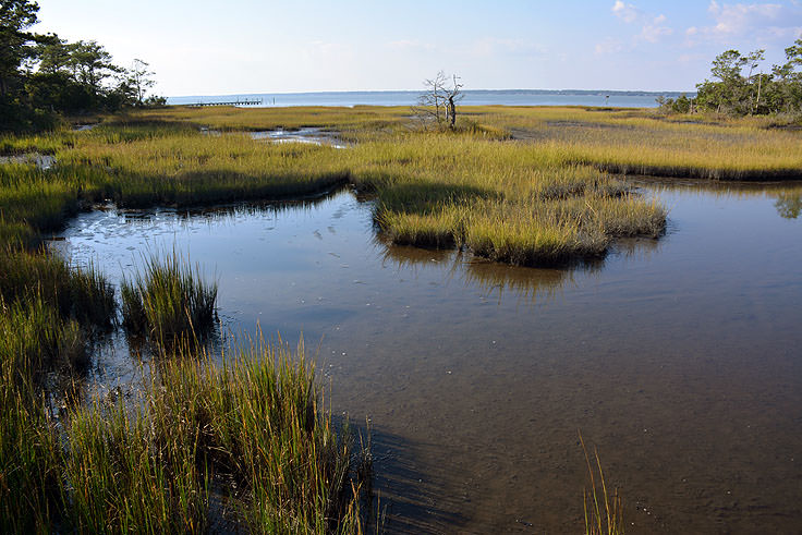 Marsh view from the N.C. Aquarium at Pine Knoll Shores